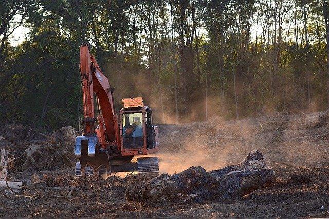 odlesňování.jpg